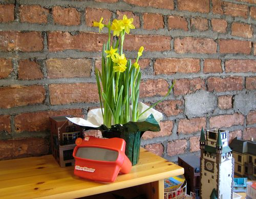 Daffodils 2009