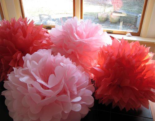 Pink pompoms (1)