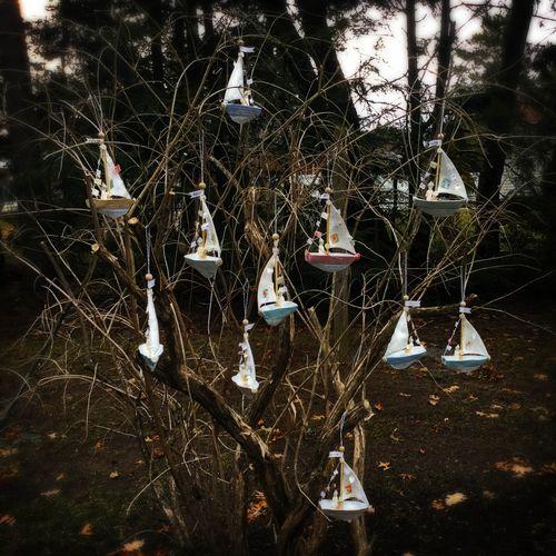2016 boats tree
