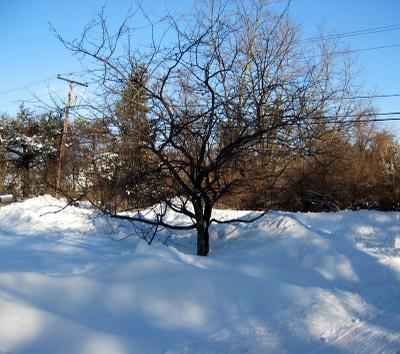 Snow_feb_15